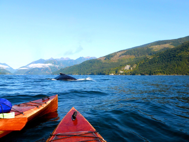 Kayak Tours Vancouver Island