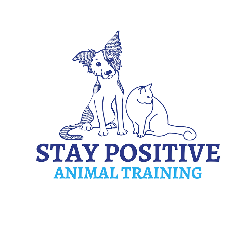 Stay Positive Animal Training Denton Texas