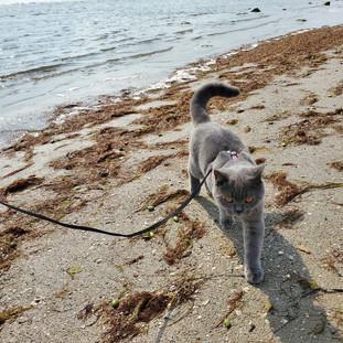 McGregor on the Beach