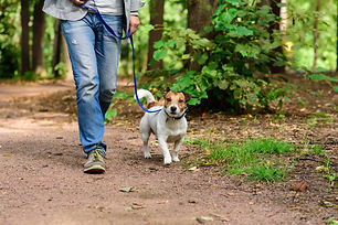 Man and dog on loose leash hiking at forest by footpath.jpg