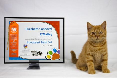 Advanced Trick Cat