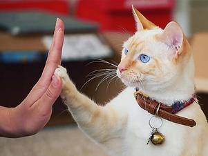 cat-high-fives.webp