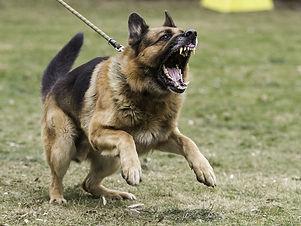 Aggressive_Dog_2.jpg