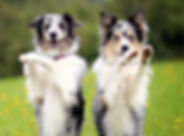 advanced-dog-tricks-class.jpg