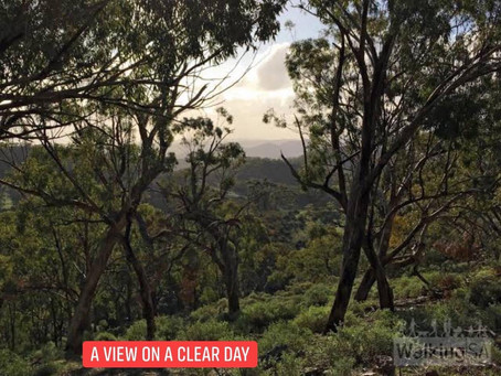 DAY 11: WAUKARIE CREEK CAMP TO MOUNT BROWN