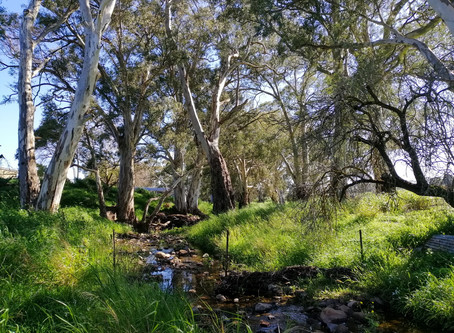 DAY 33: TANUNDA TO MOUNT CRAWFORD