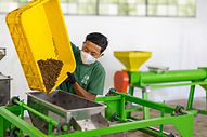black soldier fly indonesia production