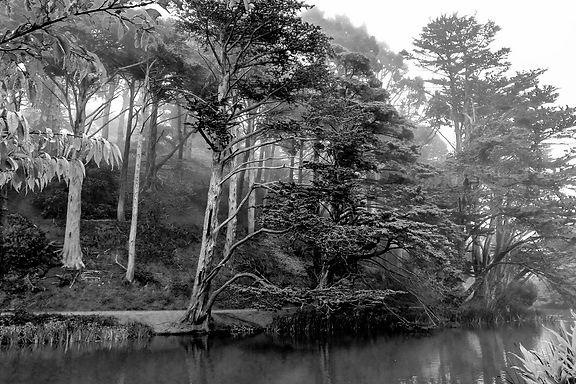 Trees&StoweB&W.jpg