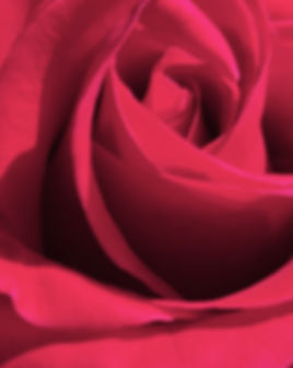 RedRoseAbstract6.jpg