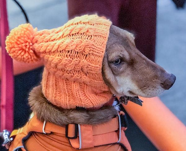 Dog in Knit Cap.jpg
