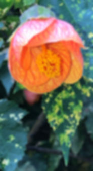 OrangeFlower3.jpg