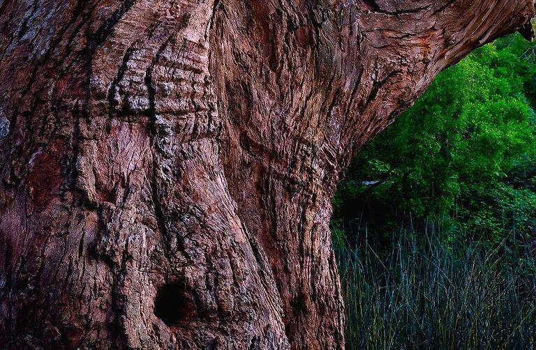 TreeTrunk&TreeNL_319.jpg