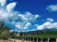 Vineyards2_edited.jpg