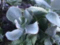 GreenPlant4.jpg