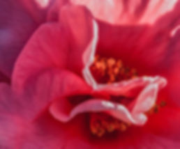 RedCameliaAbstractCropped.jpg
