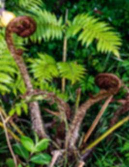 Ferns&Spirals.jpg