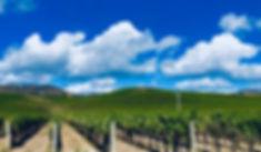 Vineyards5.jpg
