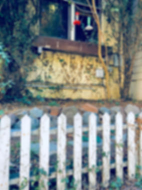 HouseVines&Fence.jpg