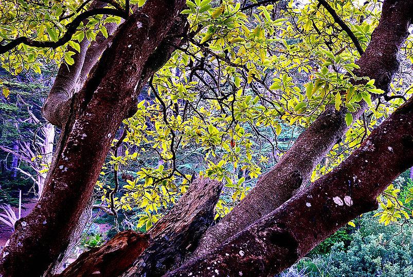 BacklitLeaves&Branches, Stowe.jpg