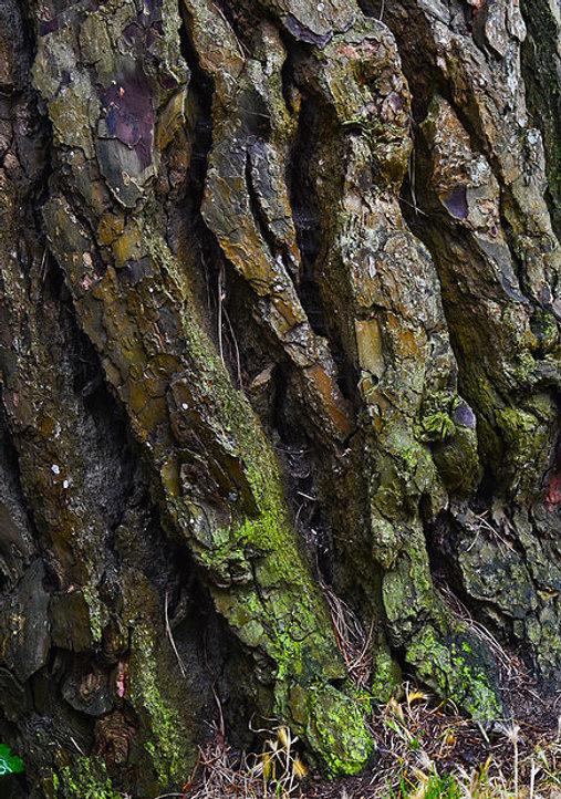 TreeTrunk&Moss.jpg