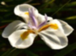 WhiteFlowerOrange&LavenderDetails copy.j