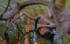 OrangeReflectionsThruTree,Stowe.jpg