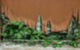 PeelingPaint&Ivy,Presidio.jpg