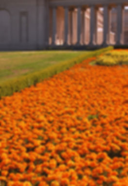 PFA& Flowers.jpg