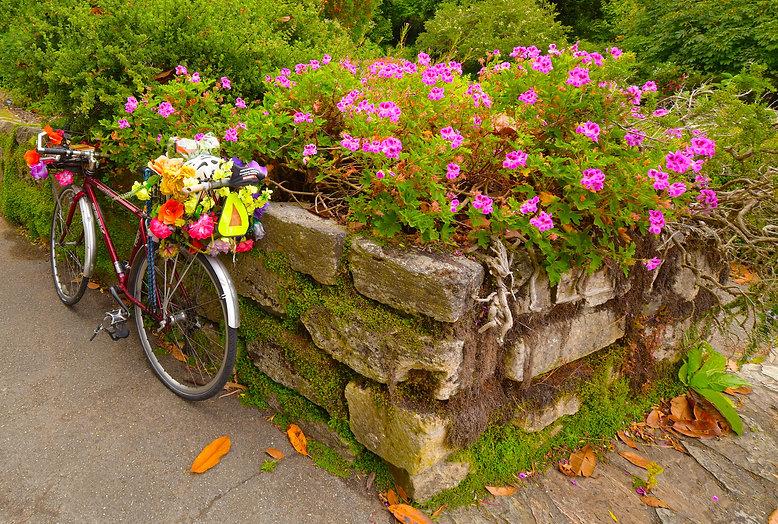 Bike&Flowers copy.jpg