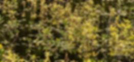SwampPattern,NoLake.jpg