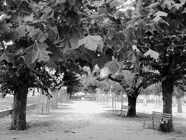 MonkeyTrees&WalkwayB&W copy.jpg