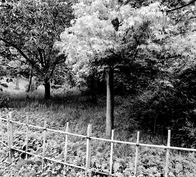 CrudeFence&Trees2.jpg