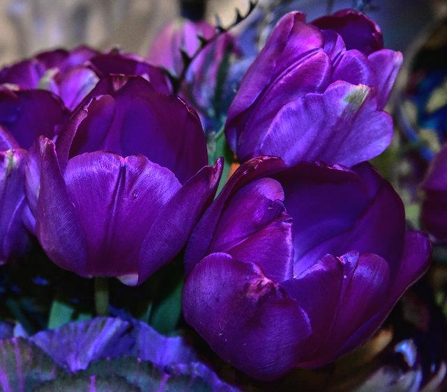 Tulips3-1.jpg