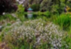 Daisies&Pavillion1.jpg