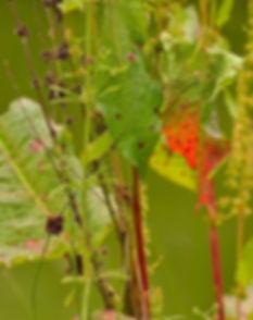 Berries&Leaves_Stowe.jpg