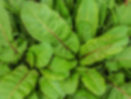 Leaves&RedStems-.jpg