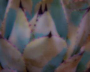 Purple-TippedSucculent.jpg