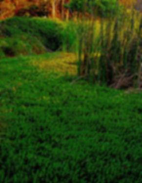 Swamp&Reeds,GreenStudy,NoLake.jpg