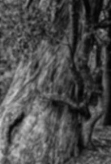 TreeHuggingATreeB&W.jpg