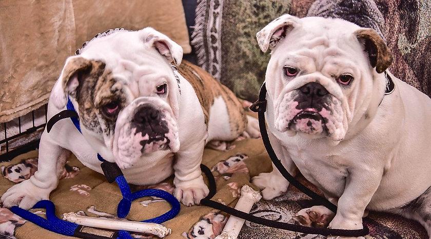2 Bulldogs.jpg