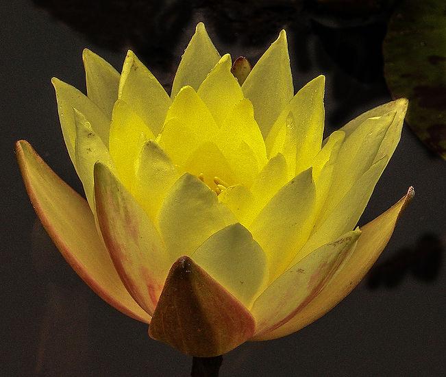 LotusSideViewagBlack copy.jpg