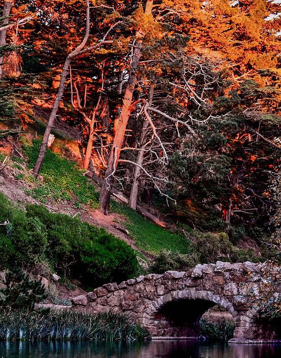 SunsetOnTreesStowe2.jpg