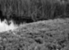 SwampMacroB&W.jpg