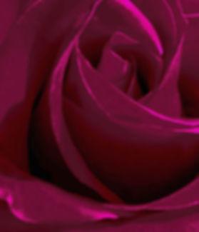 Red Rose3.jpg