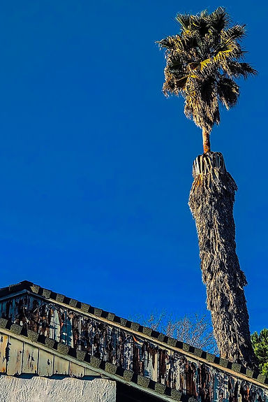Roof and Palm Tree.jpg