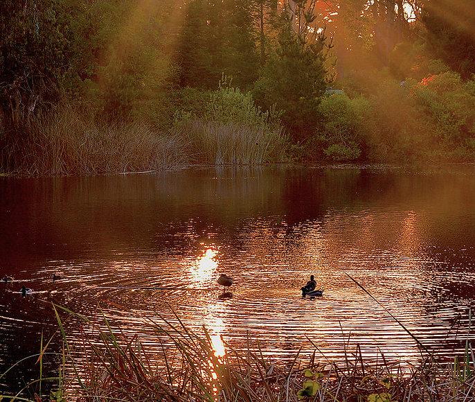 DucksInGodLight,No.Lake.jpg