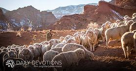 devo_1200_shepherd_2020.jpg
