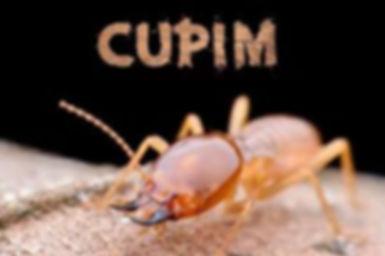 cupins.jpg