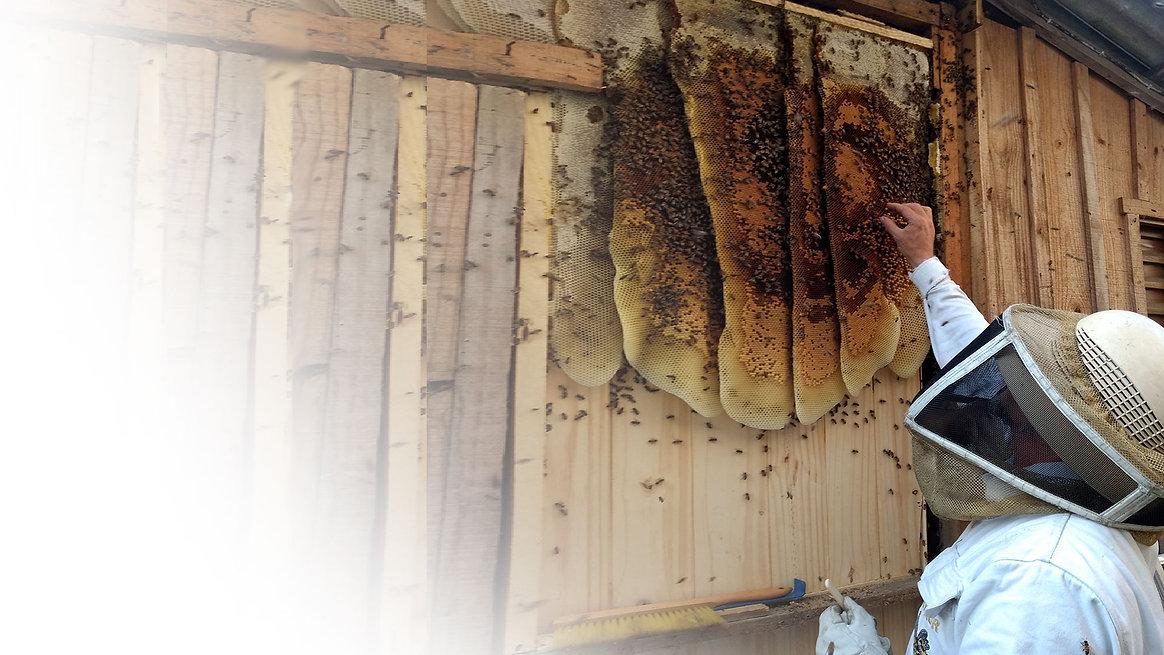 abelhas.jpg