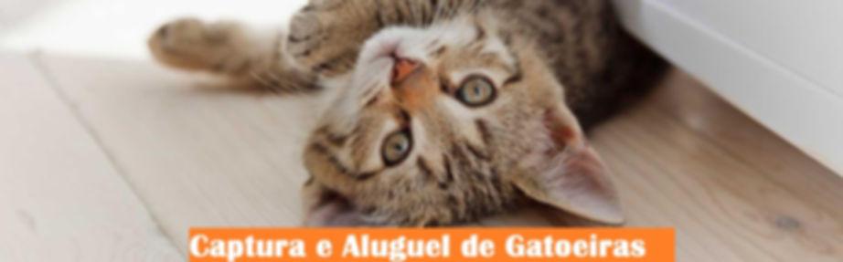 FOTO DOS GATOS.jpg